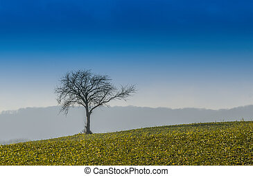 the tree in the meadow