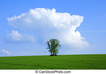 the tree in the sky