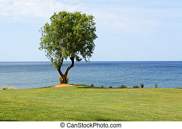 The tree near beach at luxury hotel, Crete, Greece