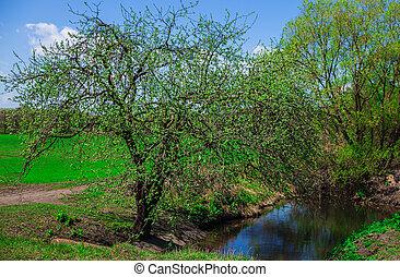 the tree near the pond