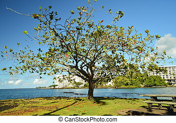 The Tree of Life In Hawaii
