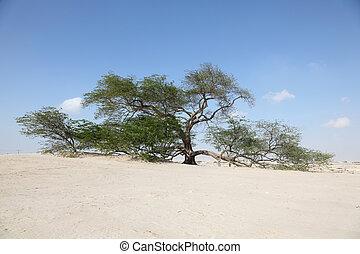The Tree of Life in the desert of Bahrain