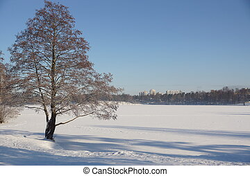 The tree on the shore of the lake covered with snow, winter