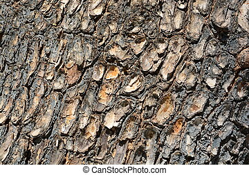 the tree side view of old wood texture in forest. Can be used as background