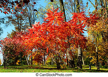 The trees in autumn colors