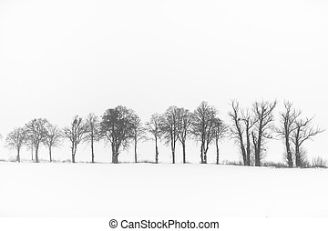 The trees in winter