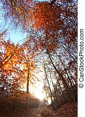 the trees - sunlight on a foggy autumn morning