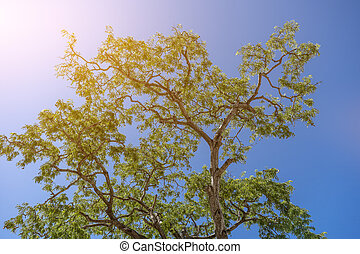 The treetops against the blue sky background