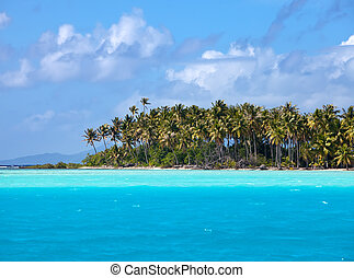 The tropical island with palm trees in the ocean
