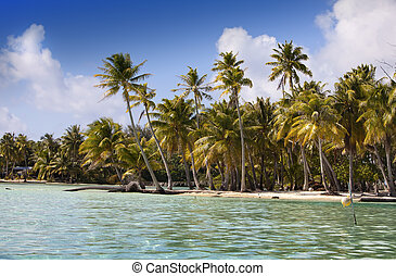 tropical island with palm trees in