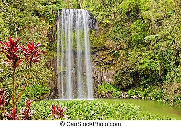 The tropical lush Millaa waterfall