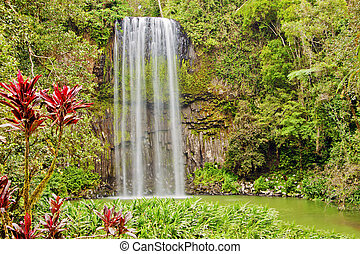 The tropical lush Millaa waterfall