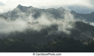 The tropical mountains forest in Thailand