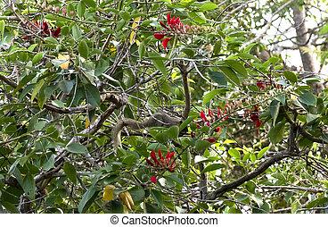 The tropical squirrel (Callosciurus erythraeus) on a branch of a tree