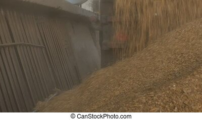 The truck pours out corns or grains of wheat into the...