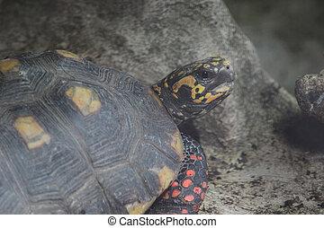 the turtle , Wild life animal. - the turtle , Wild life...