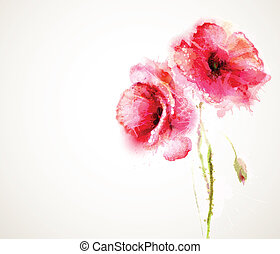 red poppies - The two flowering red poppies. Greeting-card.