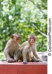 The two monkeys