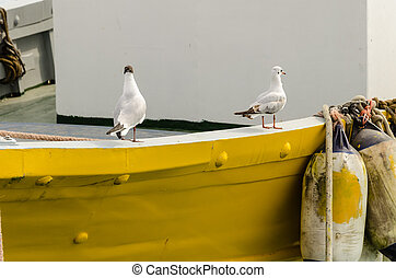The two seagulls