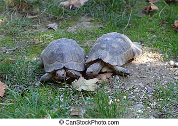 The two turtles looked at each other in the park