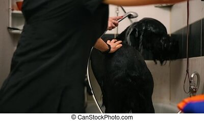 The two women, my dog at the salon for haircuts dogs preparing for the professional exhibition