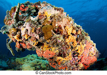 The underside of a coral outcropping showing heavy coral ...