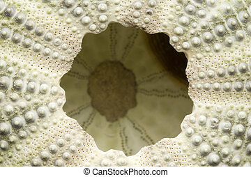 The underside of a sea urchin - Detailed close up of the...