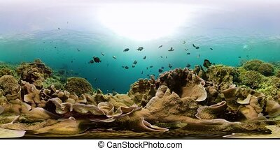 The underwater world of a coral reef 360VR. - Tropical...