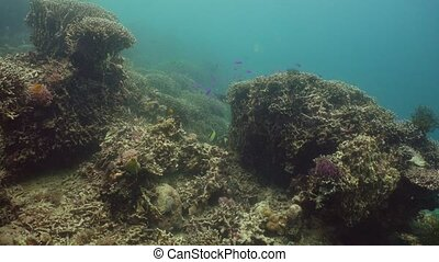The underwater world of a coral reef. - Beautiful underwater...