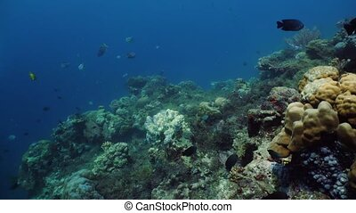 The underwater world of a coral reef.