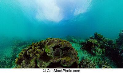 The underwater world of a coral reef. Philippines.