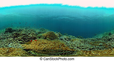 The underwater world of a coral reef. Philippines. Virtual Reality 360