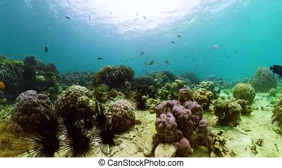 The underwater world of a coral reef. - Tropical fishes and...