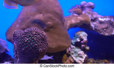 the underwater world of the Red Sea
