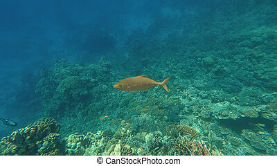 The underwater world of the Red Sea. Marsa Alam