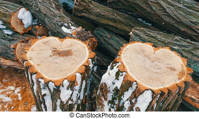The unusual shape of two tree trunk in the shape of a heart,...