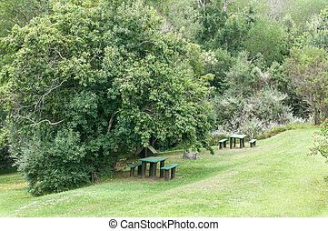 Valley of Ferns picnic spot