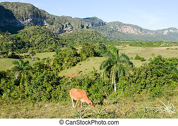 The valley of Vinales on Cuba