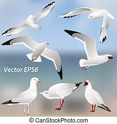 The various postures of the seagulls on the sea  background
