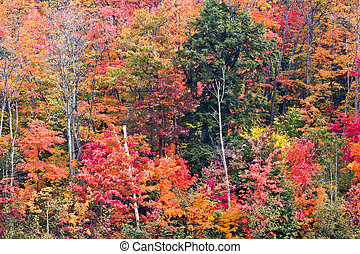 The Varying Colors of Fall Leaves