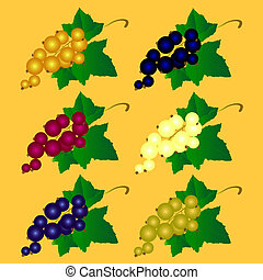 The vector illustration of a currant of different colors