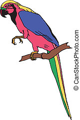 The vector of parrot