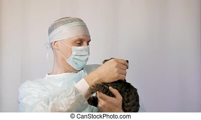 The veterinarian strokes the kitten, he examines it before the operation.