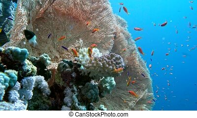 The view of a diver exploring a colorful reef, Red sea, Egypt
