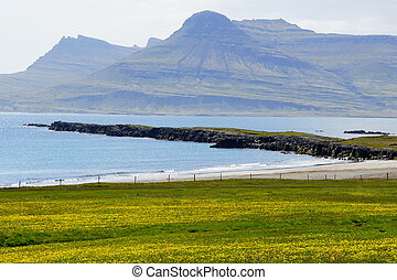 The view of green landscape, rock formations and cliffs by the ocean near East Fjords, Iceland during the summer