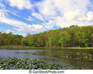 The view of the water plants and trees at Folley Pond by ...