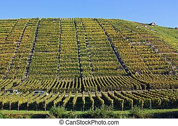 The vineyards along the river Neckar, Germany