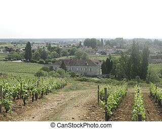The vineyards of Burgundy, France