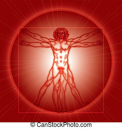 The Vitruvian man (Homo vitruviano). Red version.