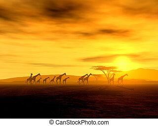 The Walking Tour - Illustration of giraffes on their walking...
